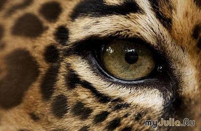Животных зеркало души животных всей