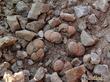 Литопсы - камни, которые цветут...