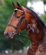 Просто красивые картинки с лошадьми.