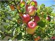 Весенний уход за садом: основные советы