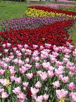 Тюльпановая весна 2010