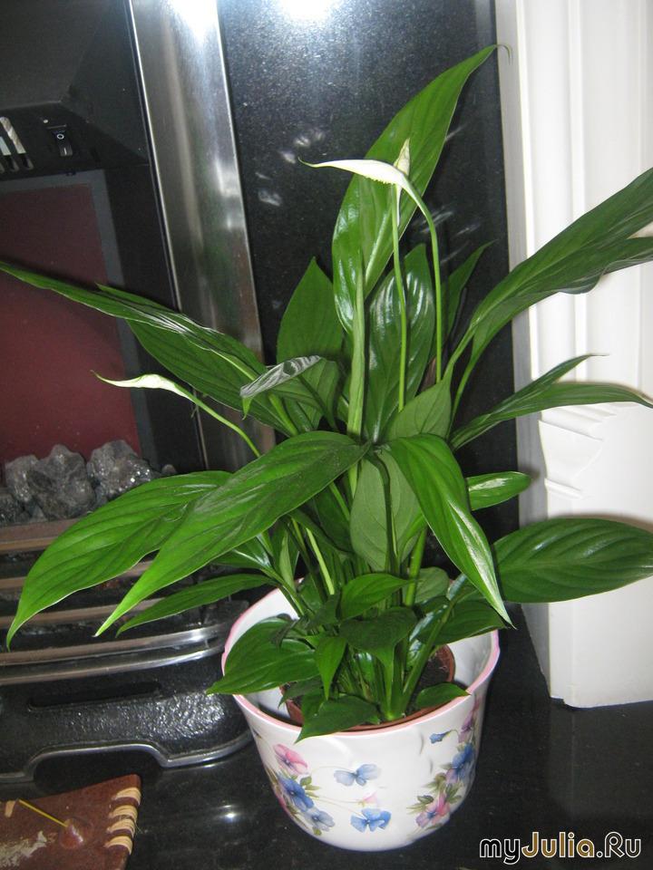 Комнатные растения не требующие света
