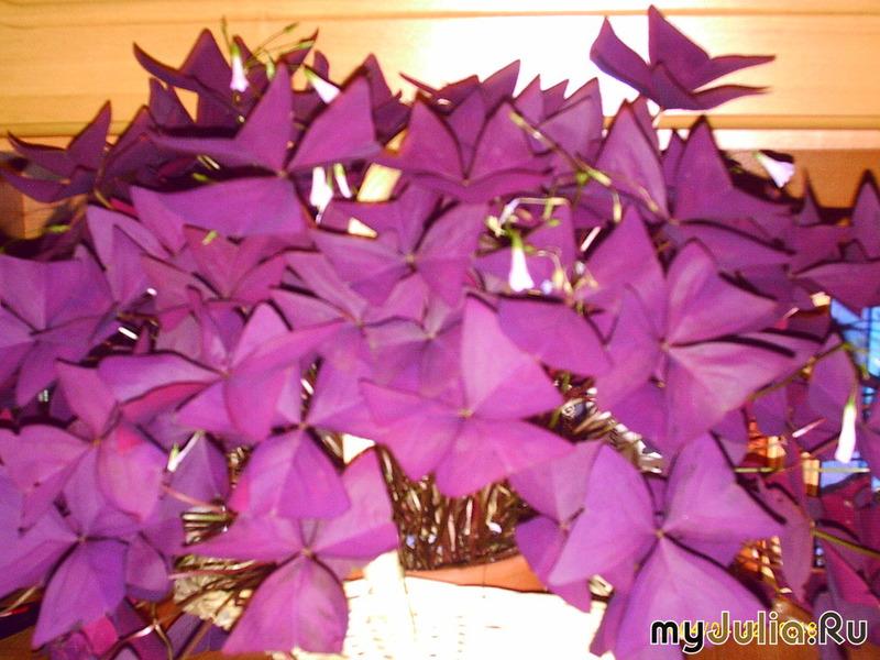 Цветок бабочка конкурс мой самый