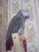 Мой любимый попугай