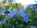 Цветущая весна в Сибири