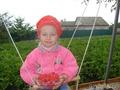 Холодное малиновое лето в деревне, угощайтесь!