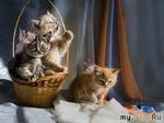 Кошачьи хлопоты или Круговорот котят в отдельно взятом доме