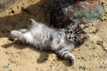 """Я на солнышке лежу..."""