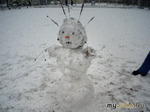 Зимние красавицы.