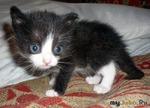 Наши новорожденные котята