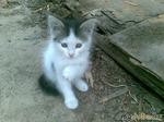 Люди добрые!!! Помогите пристроить котеночка!!! КАЗАНЬ, АУ!!!