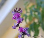 цветы уходящего лета