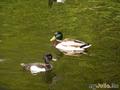 Весеннее кружение.Александровский парк май 2009