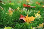 Просто это осень...