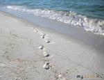 НА пляже Мексиканского залива.