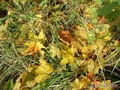 Покрывало осени