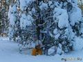 На лыжах обновляя путь...
