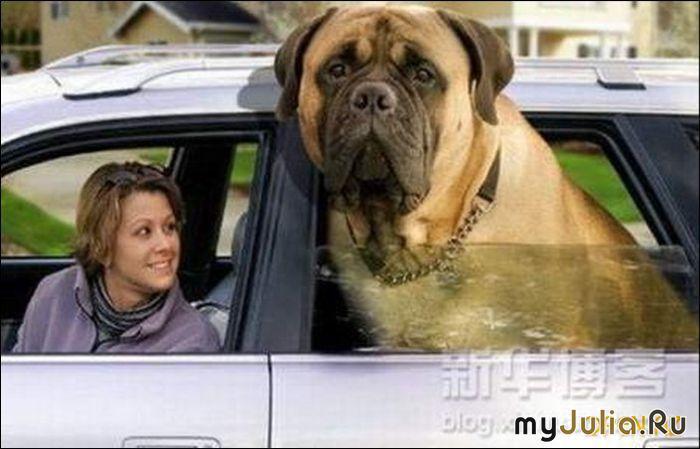 Самые большие собаки дневник