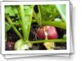 Цветы и Растения Хакасии