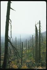 Пустой лес