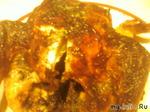 Цыпленок в сметанно - соевом соусе