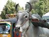 Вриндаван, Индия 2010