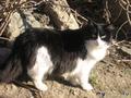 Это я -кошка Барбора(хотя меня все зовут-Бася)