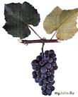 Вино и виноделие.