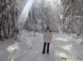 Солчечным днем в зимнем лесу