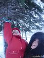 Дерни за веточку, снежок и упадет...