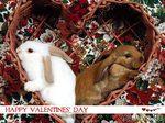 Любовный день или Что значит этот праздник для меня!