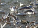 Опять птички