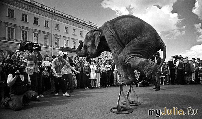 Слоны на площади