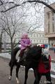 И летом и зимой катаемся на лошади (вне конкурса)