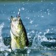 Разговоры на рыбалке