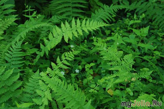 Магия леса (в зелёных тонах)