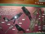 Малая часть птиц заповедника