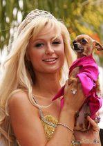 Пэрис Хилтон: блондинка - образ жизни или грамотный пиар?
