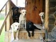 Cтадии, которые проходит владелец собаки, когда решает вылечить собаку от какой-либо проблемы поведения.