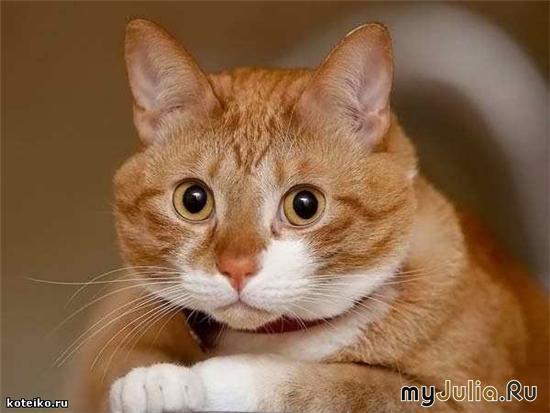 фото кот ангел