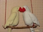 Мои птички :)