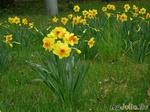Апрельское разноцветье!!!