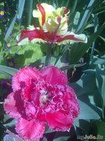 Охота за разноцветными тюрбанами