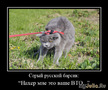 серый русский... барсик... (С) на дем Перфильев Максим Николаевич