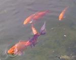 Майская охота на рыб....