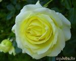 Эльф - лучшая  роза для романтического сада