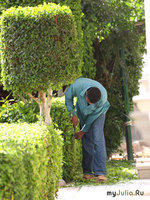 Садовник нужен?
