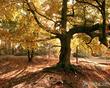 О чём я думаю, когда смотрю на фото дерева с жёлтой листвой.