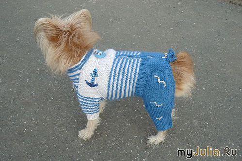Вяжем одежду для собак своими руками для
