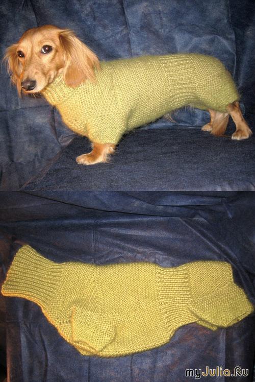 Схема вязания костюма для таксы 24